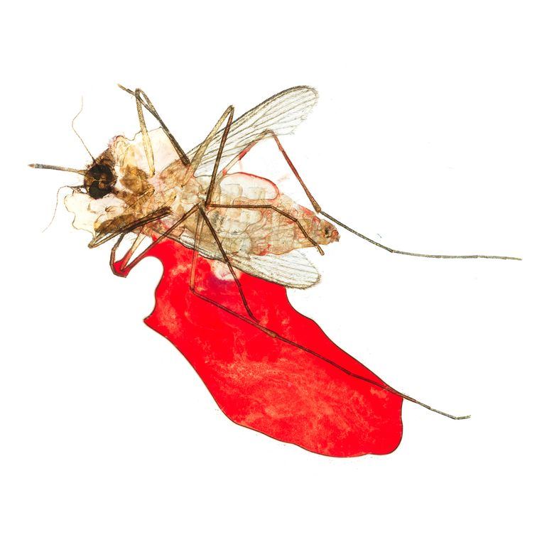 Het project Give & Take (2012) van fotograaf Jipil Jung, waar hij dood gemepte mugjes onder zijn microscoop heeft gefotografeerd. Beeld Jipil Jung