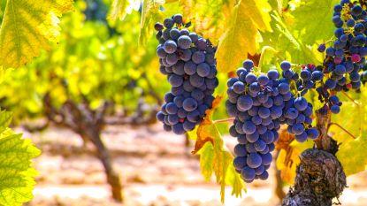 Is natuurwijn beter dan gewone wijn?