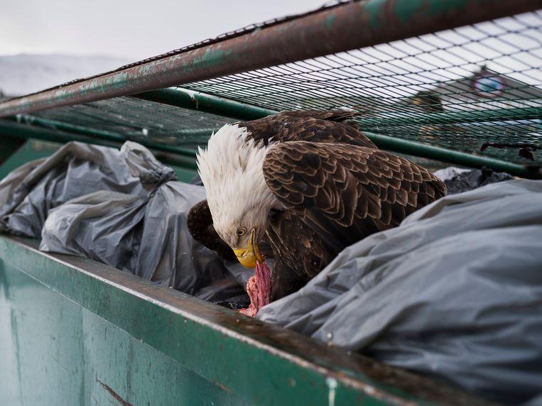 Met deze foto ('Dumpster Diver') won de Amerikaanse fotograaf Corey Arnold in de categorie 'Nature' van de World Press Photo. Beeld EPA
