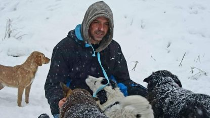 """Roemeense straathonden vinden warme thuis in Brugge dankzij Dieter: """"Enorm dankbaar werken"""""""