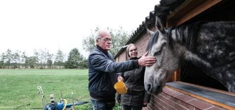 Paarden gered van de slacht na donaties: 'Godzijdank'