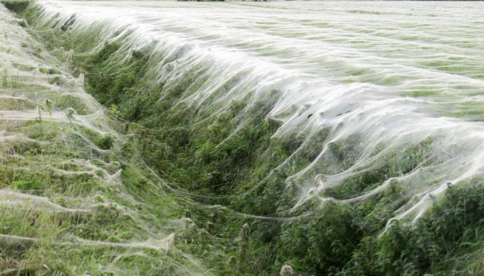 De deken van spinrag.