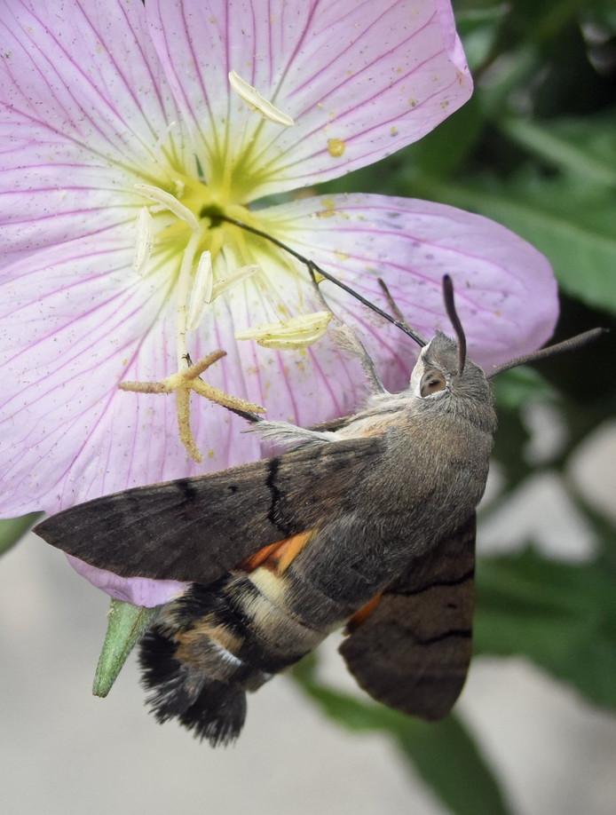 vlinder gered door boswachter Jenny