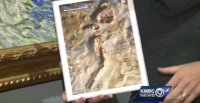 Sprinkhaan gevonden in schilderij Van Gogh