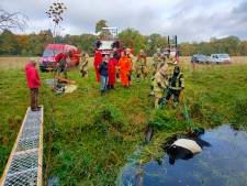 Brandweer is uur bezig om koe op droge te krijgen, maar het is gelukt