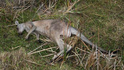 Carrefour stopt verkoop kangoeroevlees