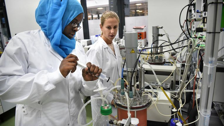 Onderzoekers bij Koppert Biological Systems in Berkel en Rodenrijs Beeld Marcel van den Bergh / de Volkskrant
