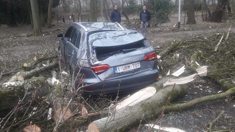 Ook aan de Meylandtlaan werd een auto geplet door een omgewaaide boom