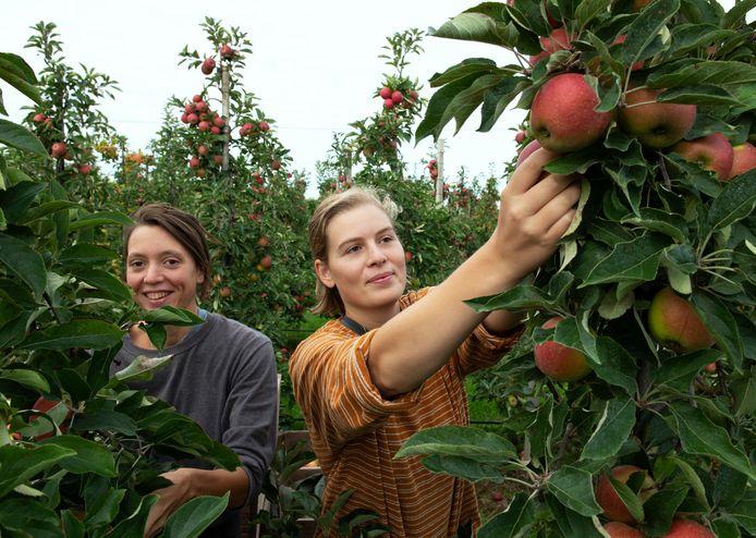 Ellen de Boer (rechts) en vriendin Laura zijn net begonnen als fruitplukkers in IJzendoorn.