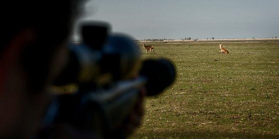 Oostvaardersplassen terug bij af: rechter verbiedt alsnog afschieten edelherten