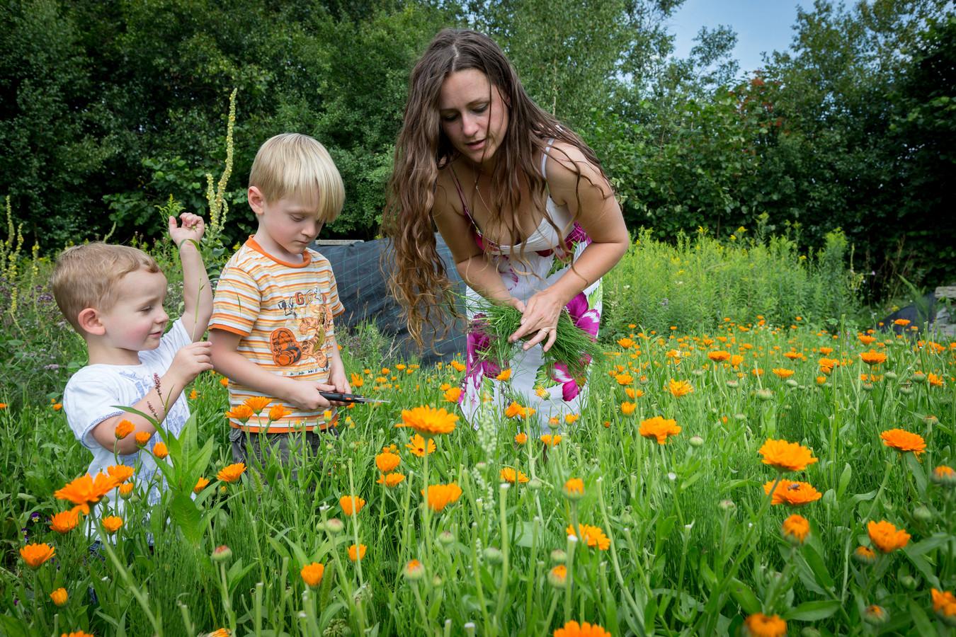 Francine van Rossem wil bij haar Kruidenhuis De Vlo ook een zelfpluktuin voor snijbloemen aanleggen.