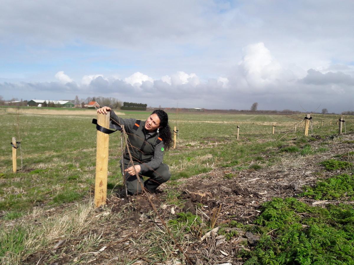 Boswachter Anouk Pattipeilohy van Staatsbosbeheer kijkt met afschuw naar de vernielde boompjes.