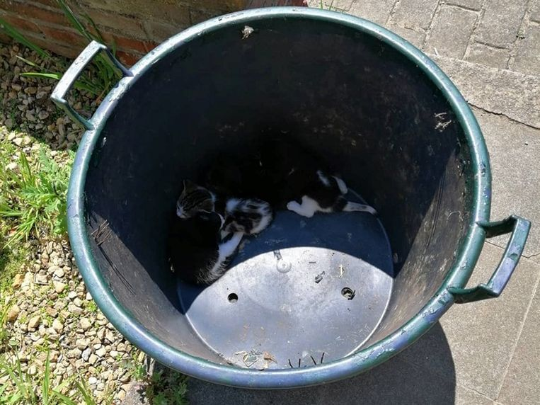 De kittens werden in een vuilnisemmer achtergelaten op de oprit naast de brievenbus.