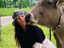 """""""Embrasse ta vache"""", le challenge qui ne fait pas rire l'Autriche"""