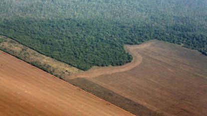 Duitsland schort donaties aan Braziliaanse milieuprogramma's deels op