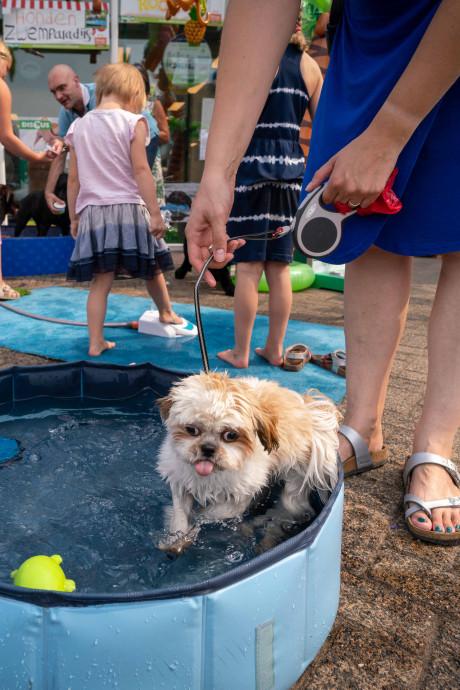Met deze 5 tips blijft je huisdier koel in de zomerse hitte