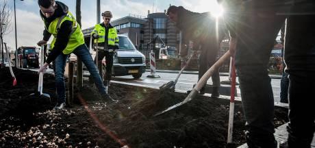 Duizenden bloembollen voor een groener Breda