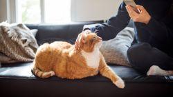 Lang leve Fifi en Max: studie toont aan dat huisdieren ons minder angstig en productiever maken tijdens lockdown