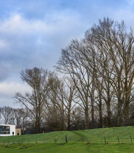 Laatste populieren op IJsseldijk bij Park Helbergen in Zutphen gekapt