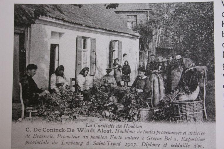 Hopplukkers met de Groene Belle in 1907.