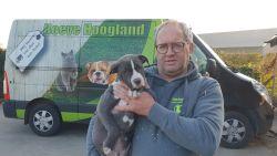 Ben Weyts fluit Black Friday-kortingen op dieren bij Hoeve Hoogland terug