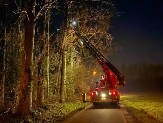 Brandweer sluit Veldekenswegel tijdelijk af wegens overhellende bomen