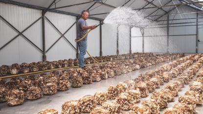 """Gentse oesterzwamkwekerij wil jongeren op goede pad helpen: """"We doen hier alles wat ze vroeger op een abdij deden"""""""