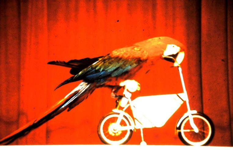 De papegaaienshow was de eerste show ooit in het pretpark.
