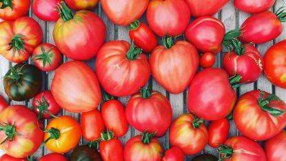 Tomaten in overvloed? Weck ze!