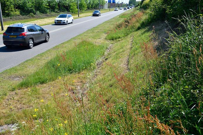 Langs de Outputweg maait de gemeente bewust niet al het gras meer weg.