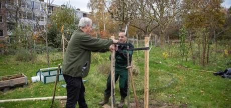 Zwolle plant op 25 locaties bomen: 'Ze schenken bewoners vertrouwen om hun gemeente groener te maken'