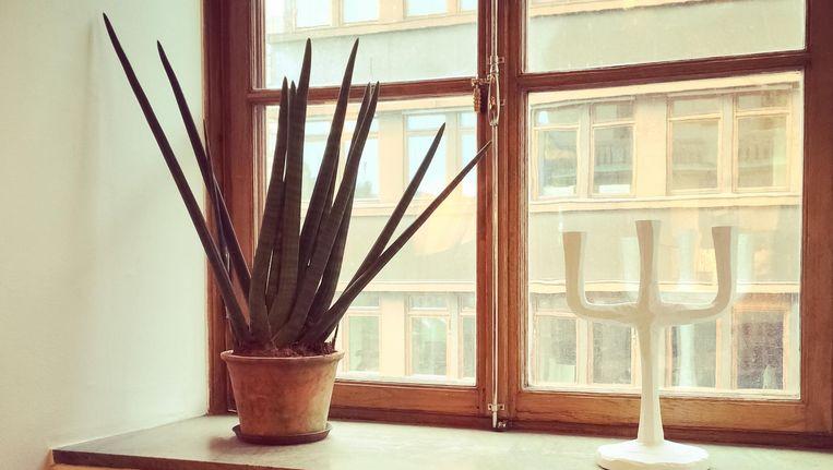 Planten Slaapkamer Baby : Deze 6 planten doen wonderen voor je nachtrust fit & gezond nina