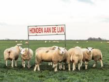 Boer Kuijer uit Soest waarschuwt hondenbezitters