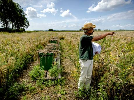 Boeren, imkers en boswachters gaan samen overschot van honingbijen in Biesbosch te lijf