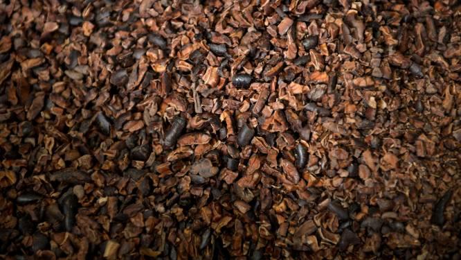 """""""Bedrijven blijven structurele problemen in cacaosector negeren"""""""
