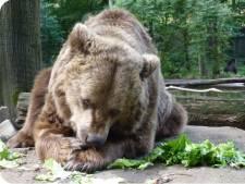 Beer overleden in Ouwehands Dierenpark