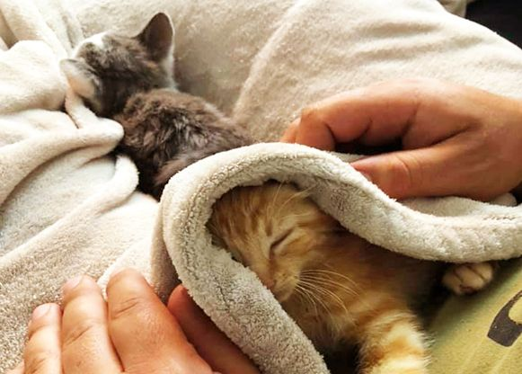 Enkele kittens (niet de dieren op de foto) kwamen op één of andere manier in de riolering terecht. De brandweer bracht redding.