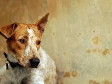 Heusden ziet niets in afschaffing belasting voor 'boederijhonden'