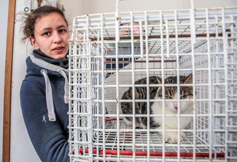 Vrijwilligster Manou Peremans van dierenasiel De Leiestreek met een van de gevangen katten.
