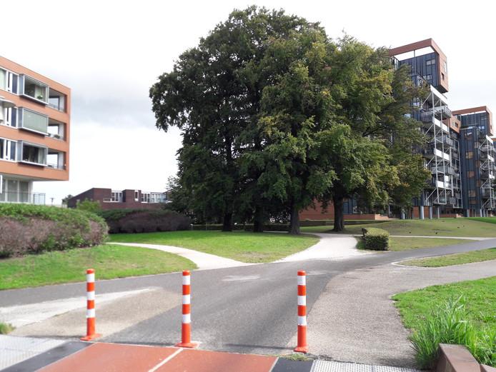 De fietspaden tussen De Freule en Halstraat/ Plantsoen Welgelegen zijn halfverhard en daarmee minder veilig voor fietsers.