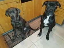 """Twee honden sterven door vergiftiging na wandeling in park, baasje is ontroostbaar: """"Wilfon gaf me nog twee likjes, zuchtte en sloot dan de ogen"""""""