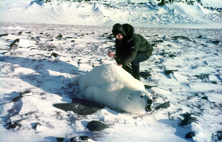 Eric Flipse geeft de tweede beer een extra verdoving.  5 okt. 1968, Kapp Lee, Beeld Expeditie Spitsbergen 1968-'69