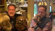Huisdieren Arnold Schwarzenegger stelen de show op sociale media