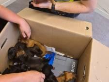 Tien gestolen puppy's teruggevonden, moederhond Luna (3) met grof geweld gedood