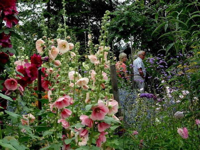 In de Stekkentuin in Espel zijn zo'n 150 stokrozen te zien op de stokrozen-, hortensia-, hemerocallis- en bamboedagen.