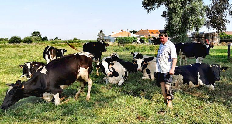 Georges Pinnock met zijn melkkoeien die na hun avontuur van dinsdag terug veilig op de wei staan.