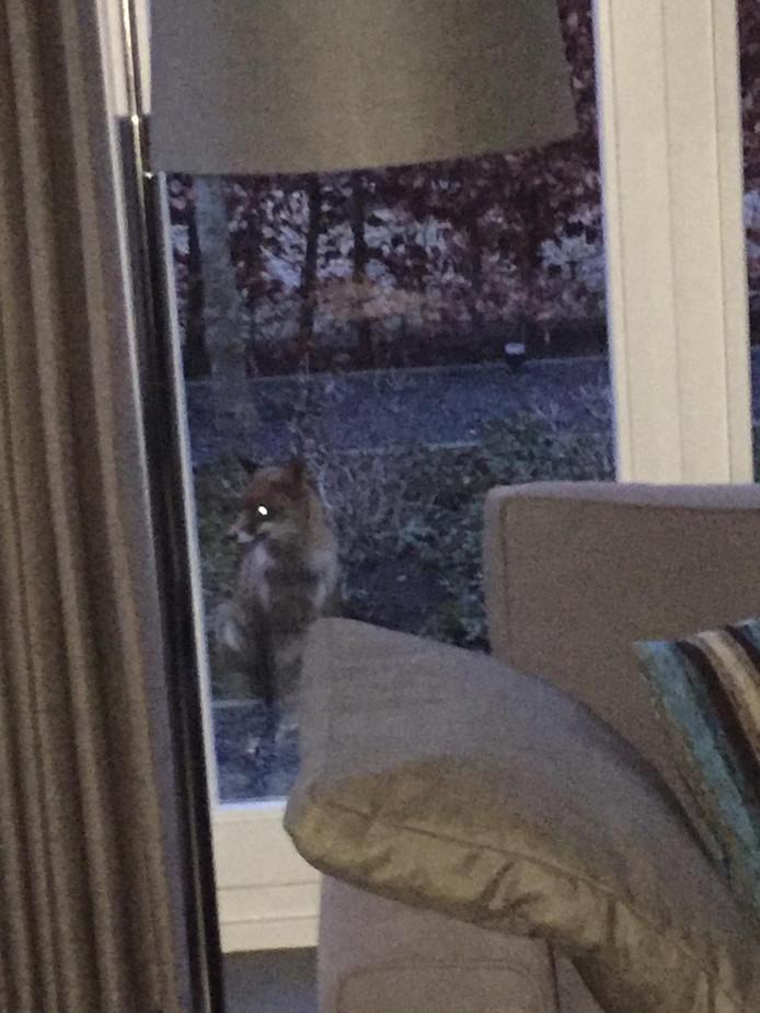 Komt een vos op de koffie bij Caroline Smits in De Hoven in Dordrecht...
