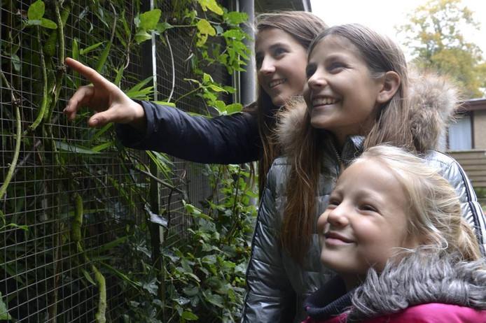 Jonge bezoekers aanschouwen het gelukkige gezin.
