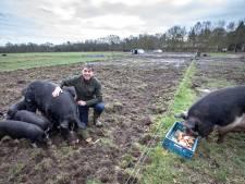 'Varkensfluisteraar' Kees Scheepens uit Oirschot: een dier moet lol hebben en zich goed voelen