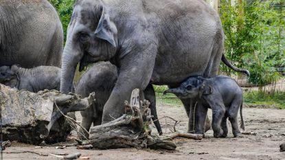 Weyts verstrengt voorschriften voor dierenwelzijn in Vlaamse dierentuinen